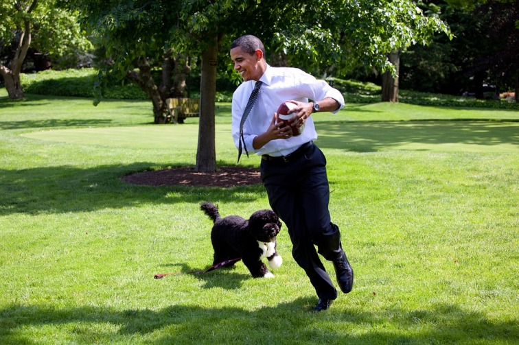 barack-obama-and-his-dog-bo-1174375_960_720